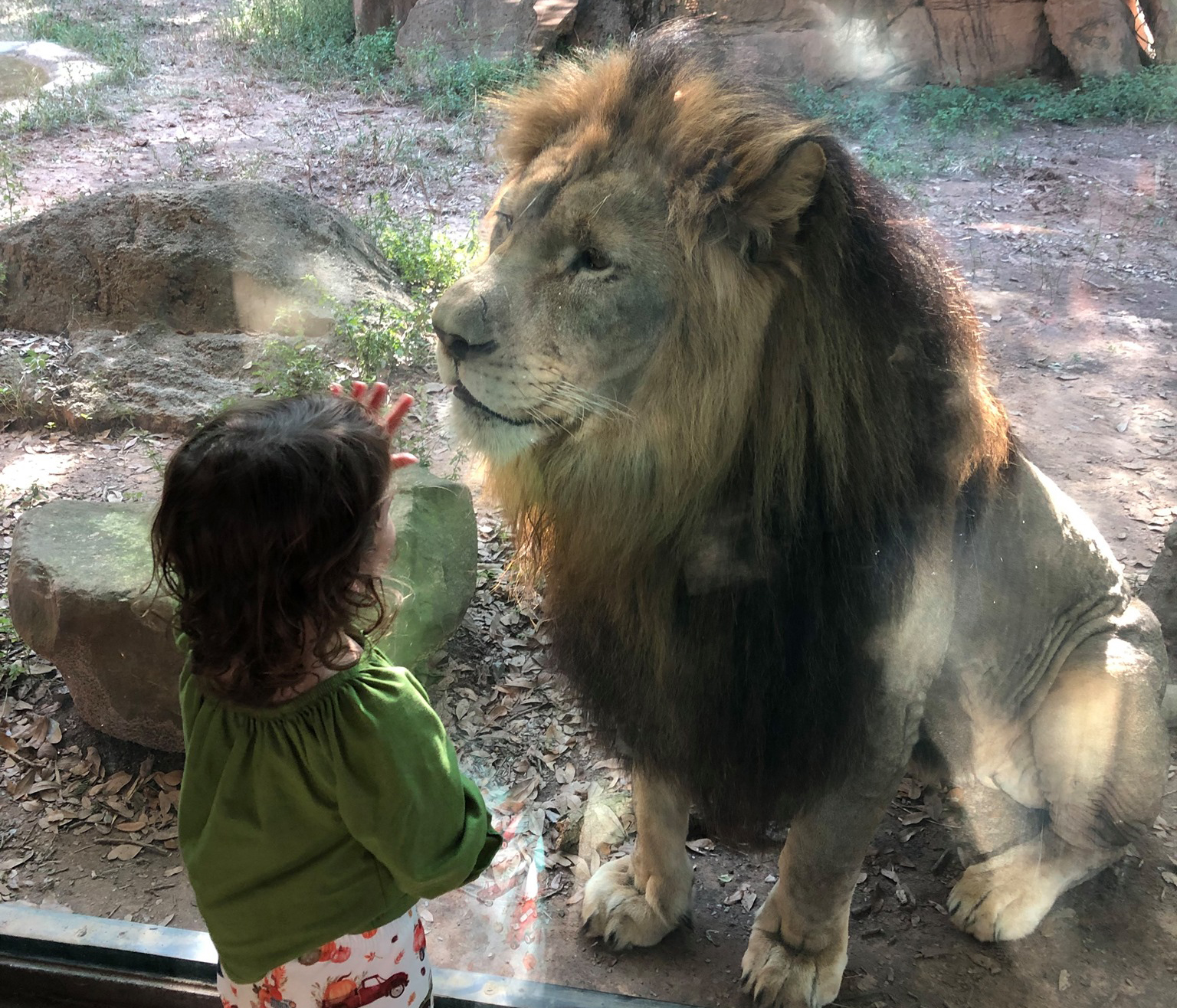 child and African lion